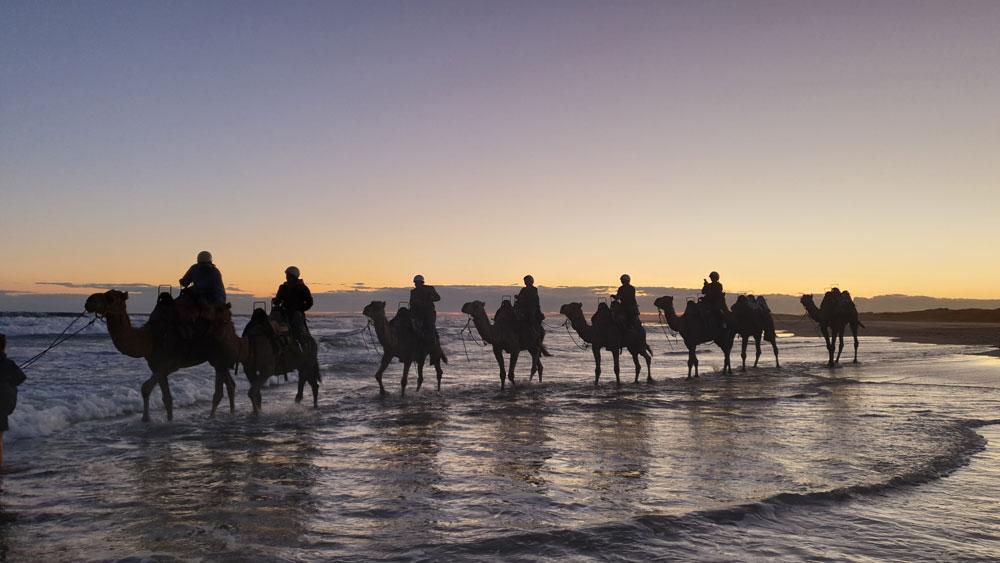 camel rides port stephens