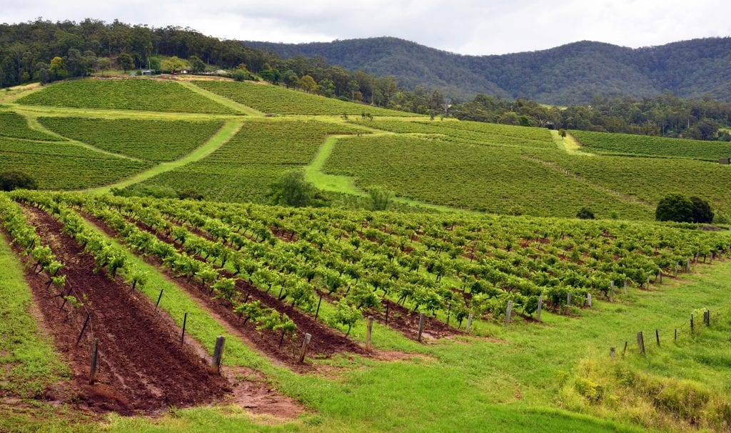 Explore the Wines of the Hunter Valley