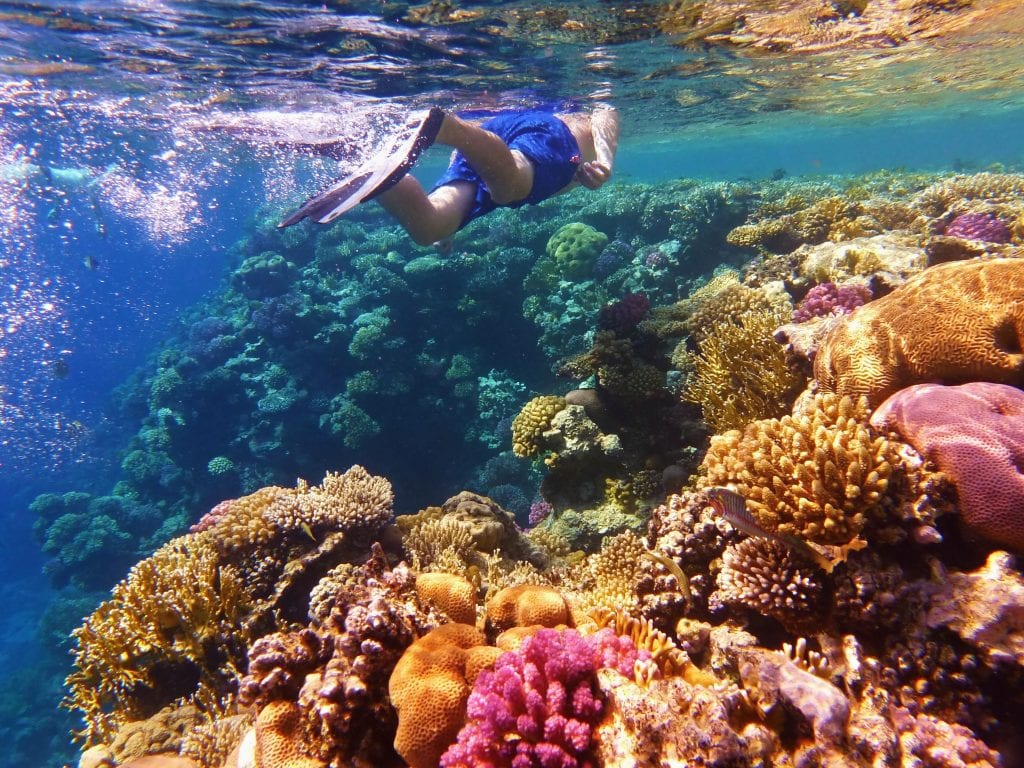 Man snorkelling in Great Barrier Reef