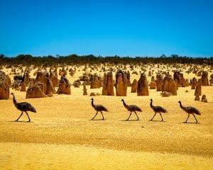 10 Unusual Aussie Attractions That Might Not Be On Your Bucket-List