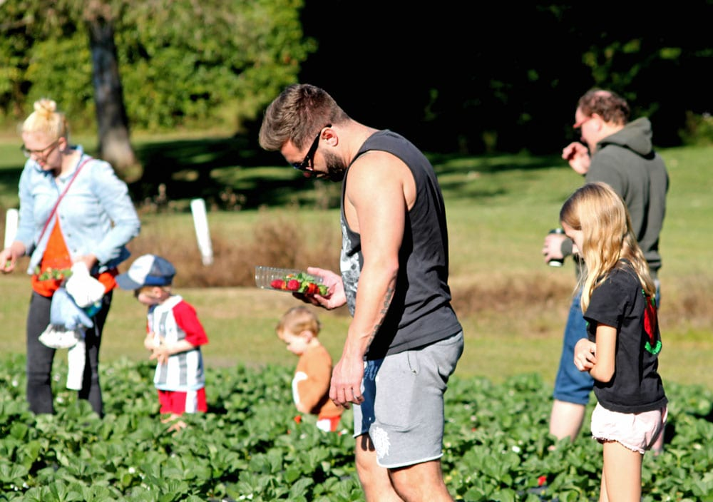 family picking fruit at strawberry fields