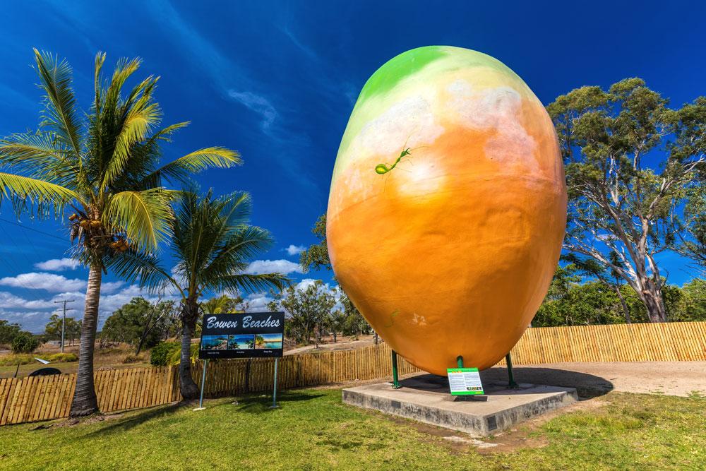 bowen giant mango