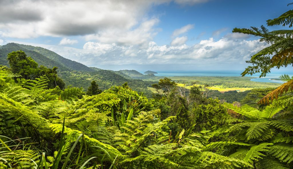 The 10 Best Things to Do in Port Douglas