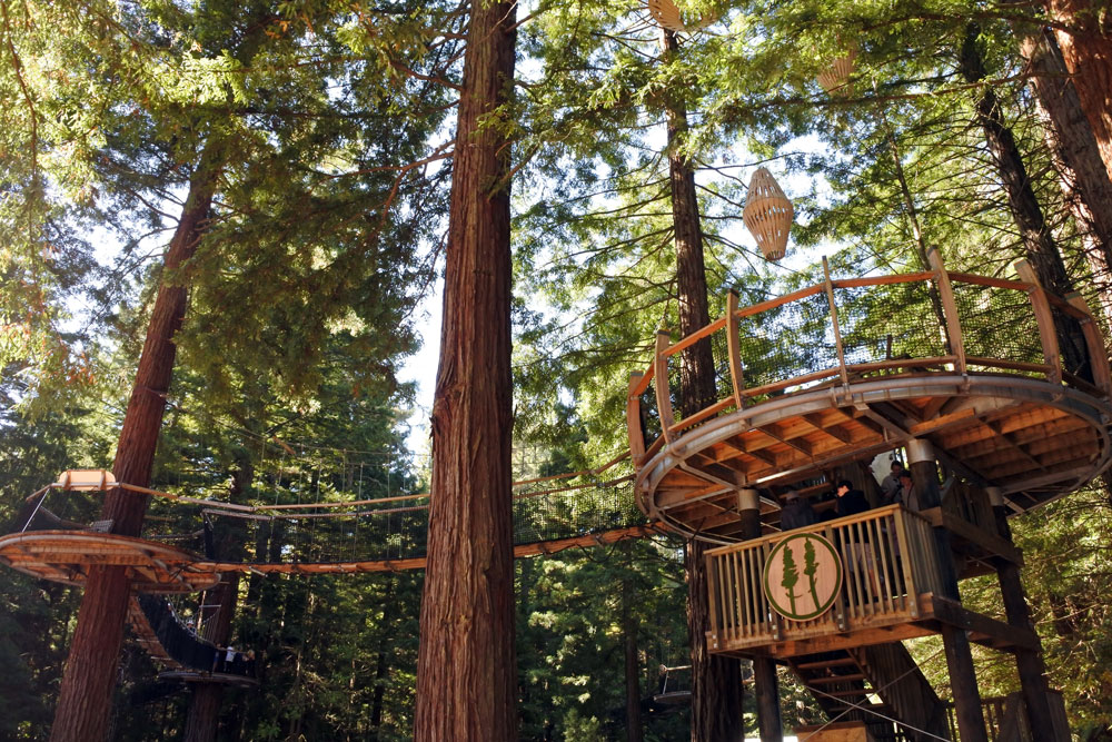 redwoods treewalk rotorua platforms