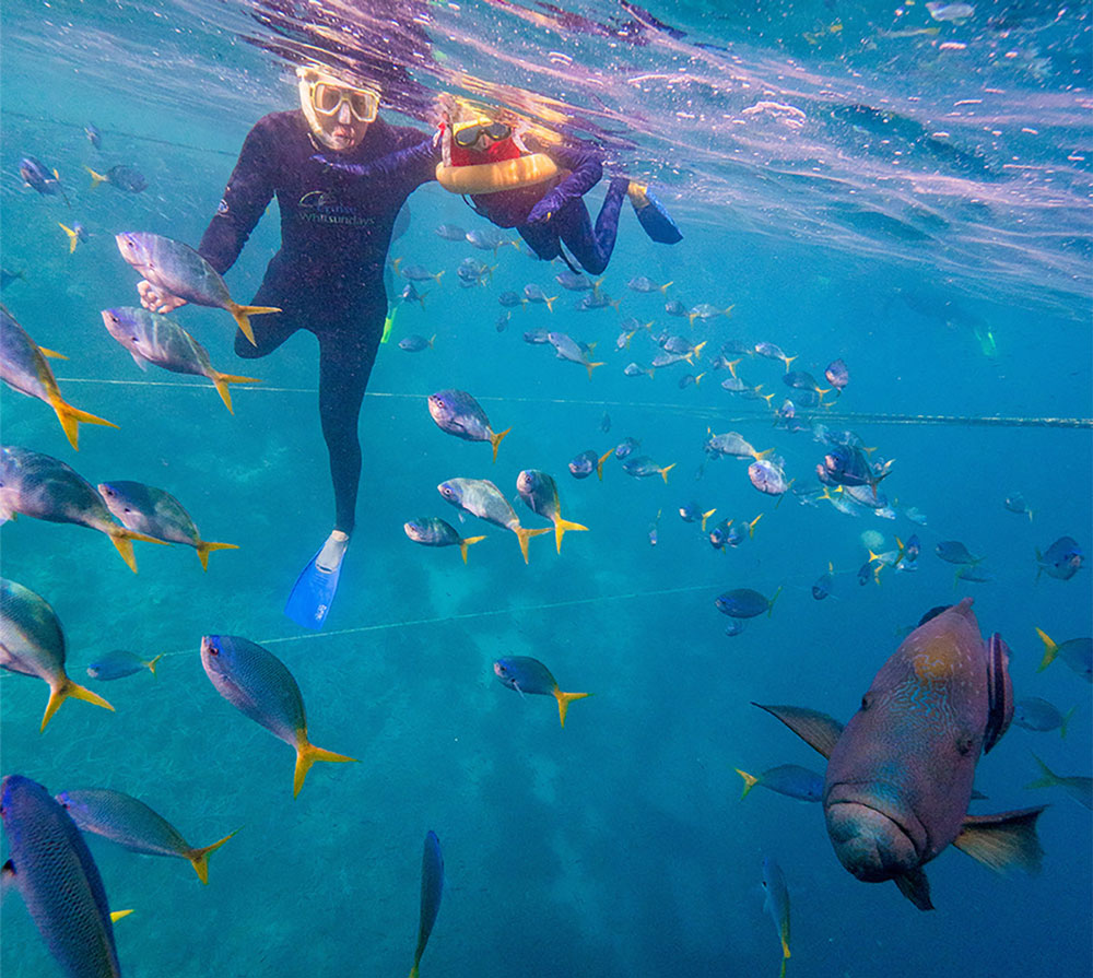 man and child snorkelling at hardy reef