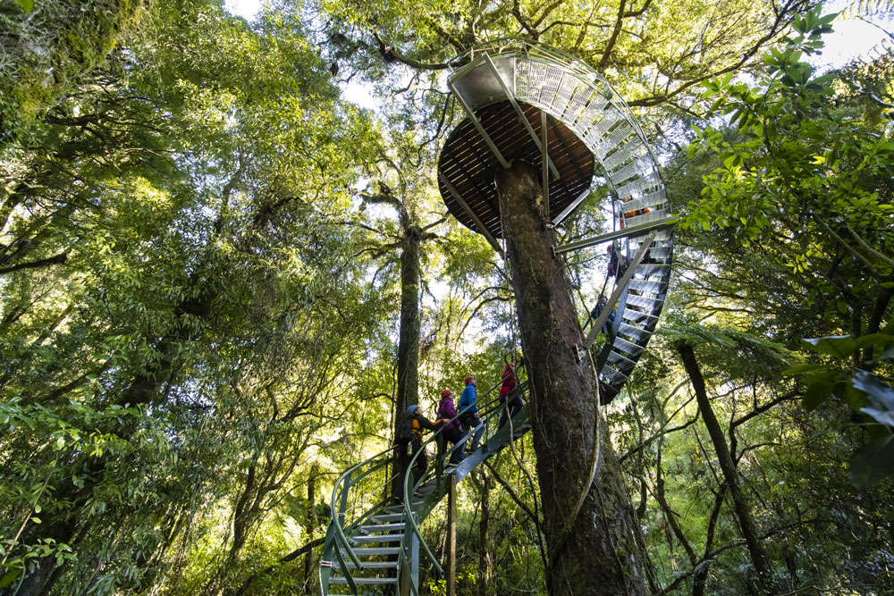 rotorua canopy tours spiral staircase in tree